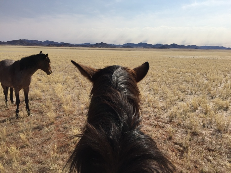 The unforgettable experience of horse riding in Namibia