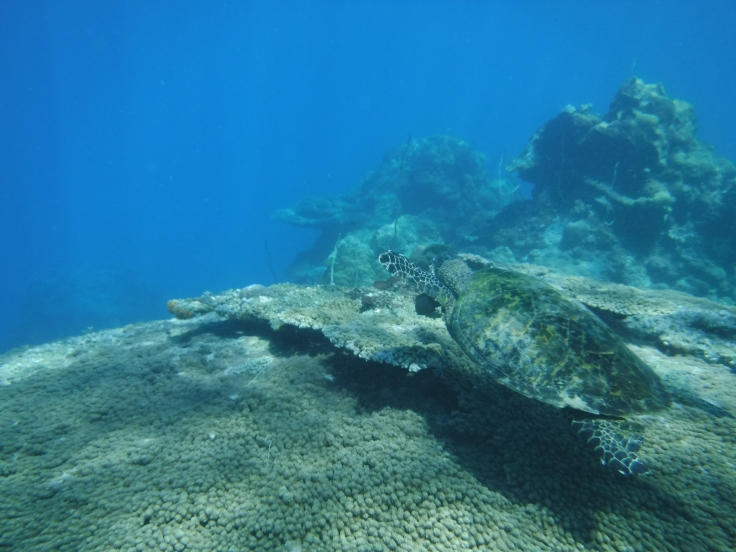 Scuba diving in Madagascar underwater shots seeing turtles