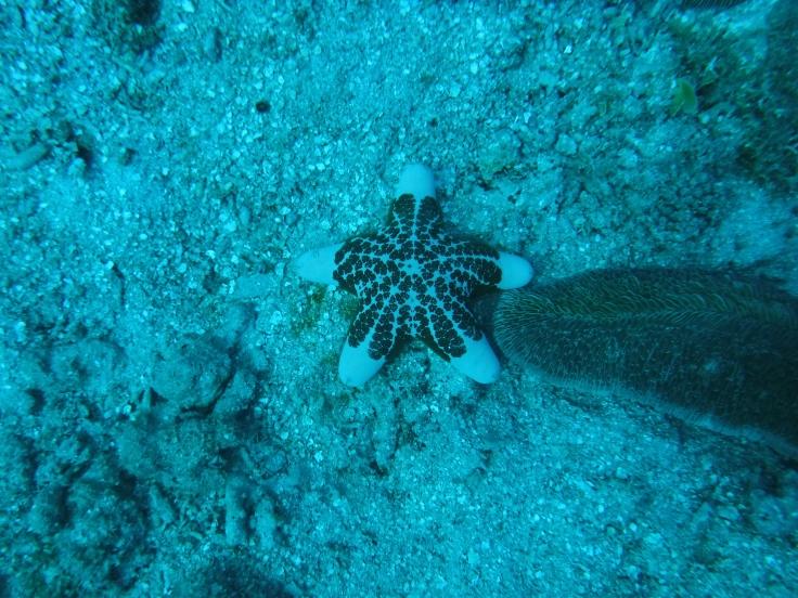 Madagascar scuba diving underwater seeing fish and wildlife