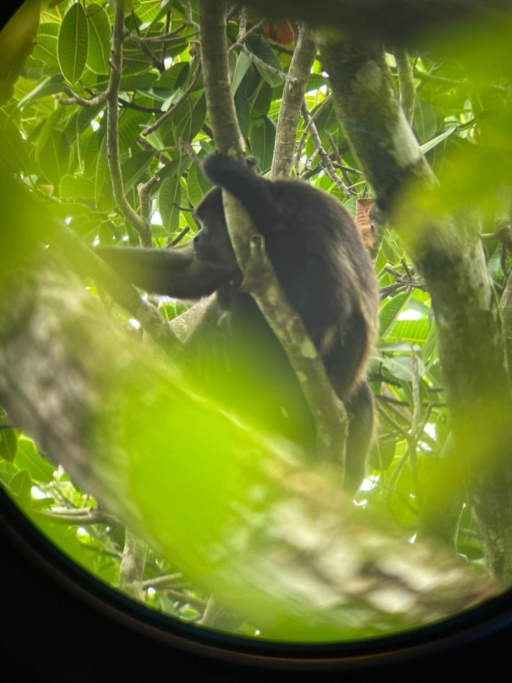 Costa Rica Explored monkey
