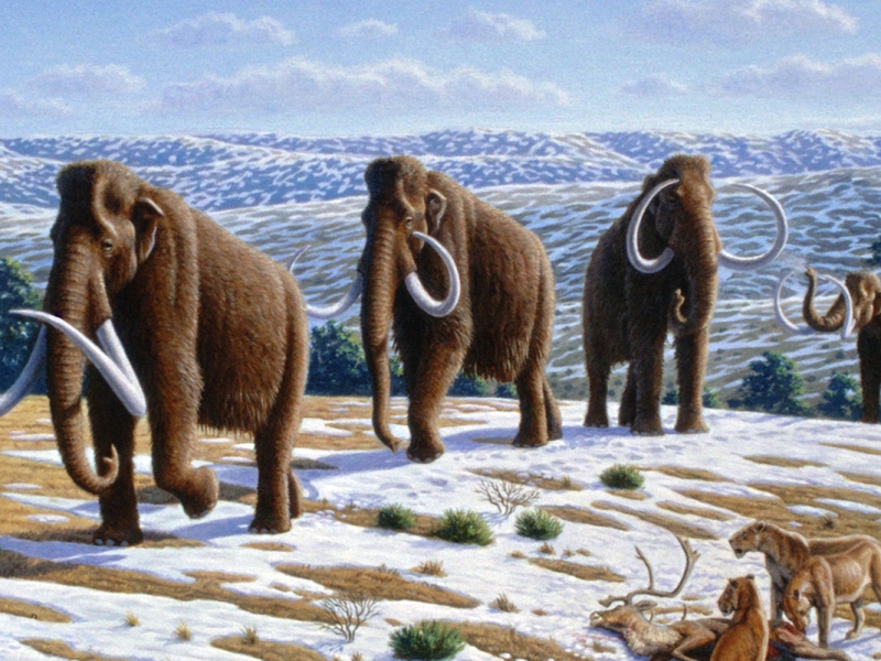 Scientists plan to revive woolly mammoths
